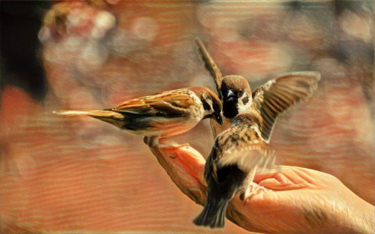 Что такое лид-магнит и зачем он нужен бизнесу: примеры, виды, особенности создания